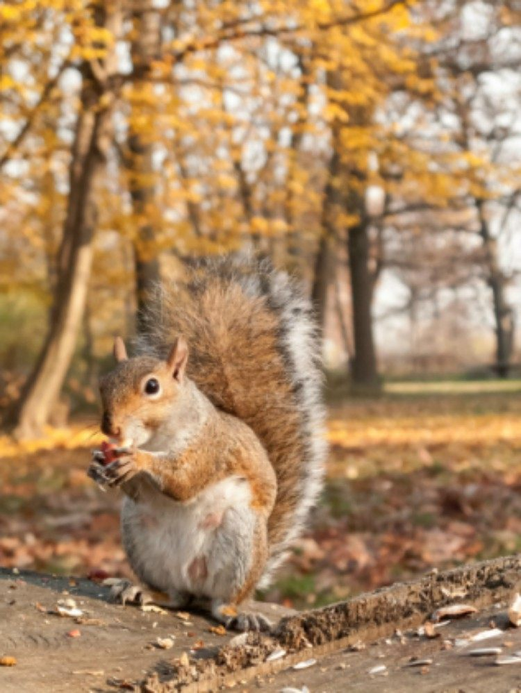 Image of squirrel eating.