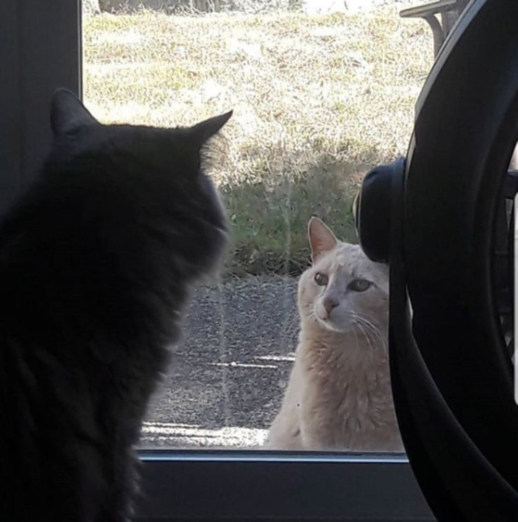 Image of cat looking at another cat from a window