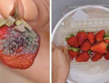 rotten and fresh strawberries splitimage