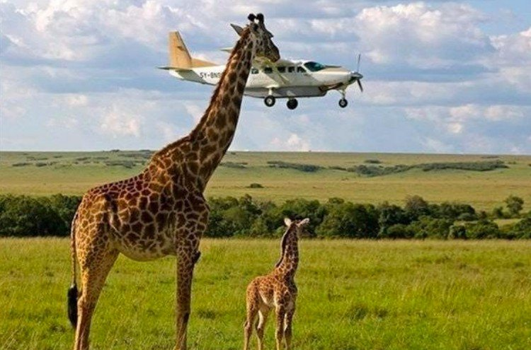 perfectly timed giraffe
