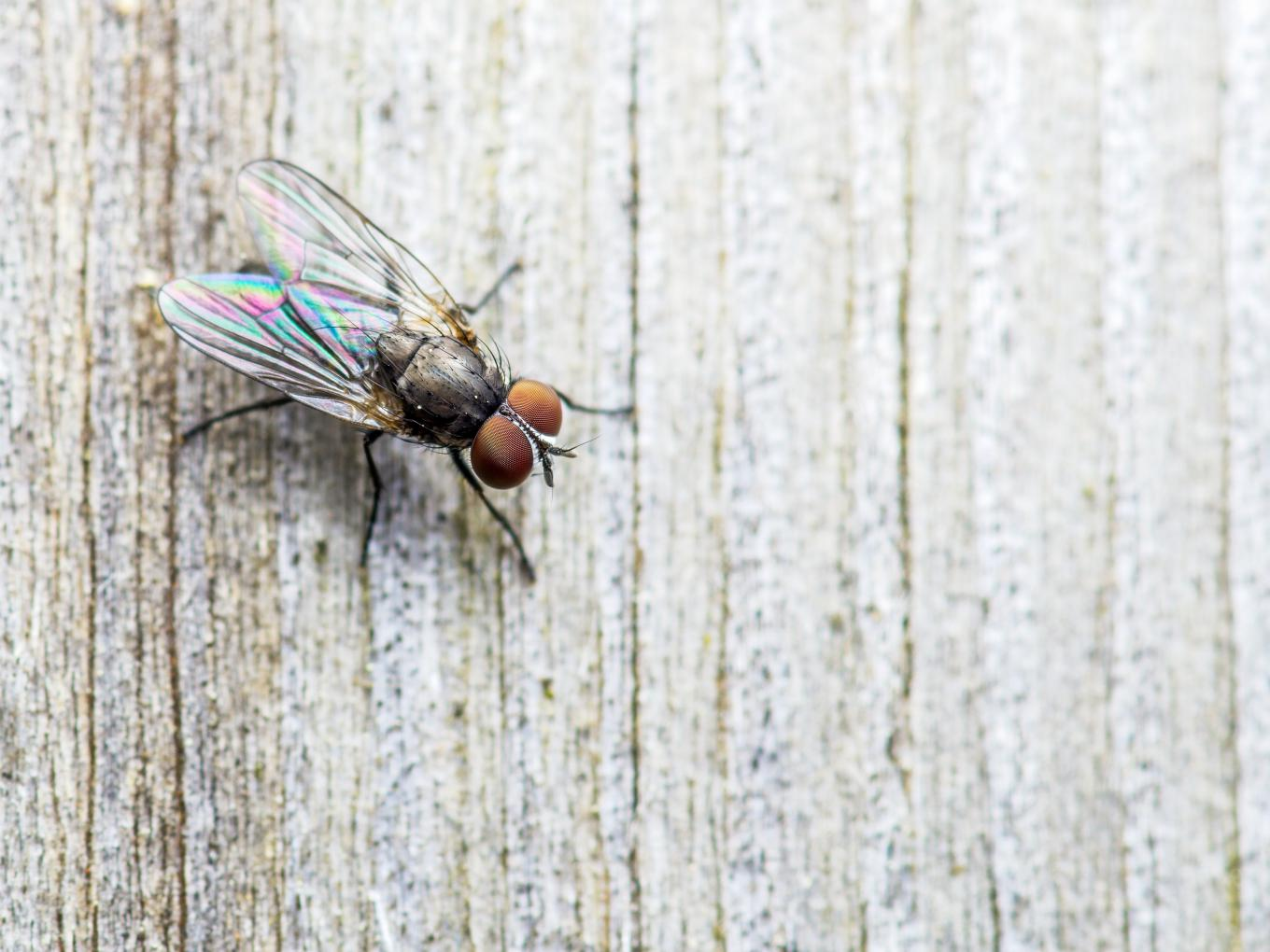 Be a Fly on the Wall:  Observe Your Own Habits Without Judgement