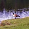 Lake Padden Trail Half