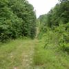 Pigeon trail