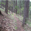 Day Ranch Trail