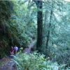 Stinson Trail Run