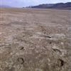 Salt Flats 100