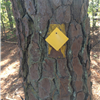 Typical permanent Bartram Trail marker.