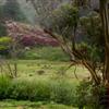 Miwok greenery