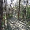 C_Trail