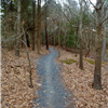 04 single track trail