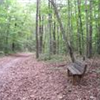 Glenora Trail