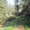 Weaver Basin Trail