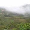 Fog at Miwok