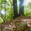 Turtle on the Bartram Trail