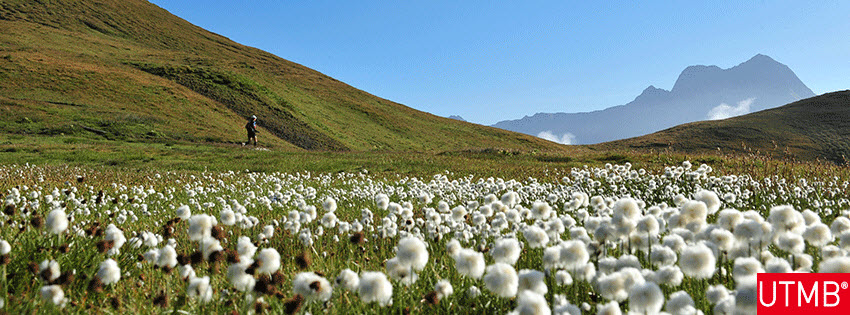ultra trail du mont blanc august 29 2014