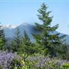 Views from Musser Hill