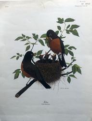Glenn Wilson Color Impression on Paper
