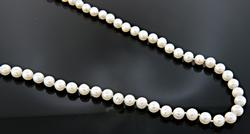 Strand of White Fresh Water Pearls