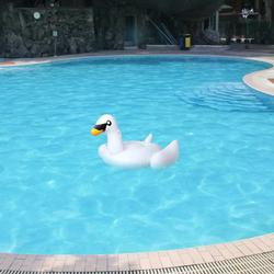 Inflatable Giant Swimming Pool Toy Swan