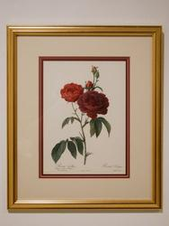 Beautiful Photogravure of a Rose.