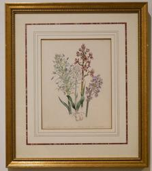 Beautiful Hand Colored Botanical Engraving
