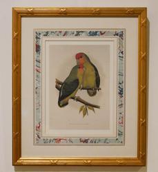 Beautiful Ornithological Chromolithograph