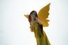 The Multi Colored Angel Figurine