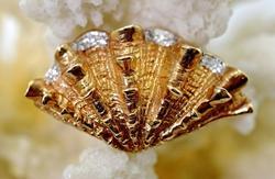 Organic 14K Sea Shell Brooch