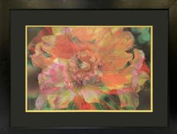 Beautiful Photogravure of a Colorful Flower
