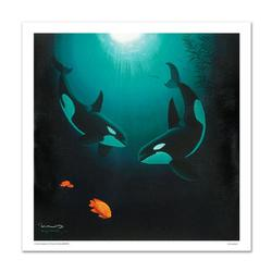 In the Company of Orcas