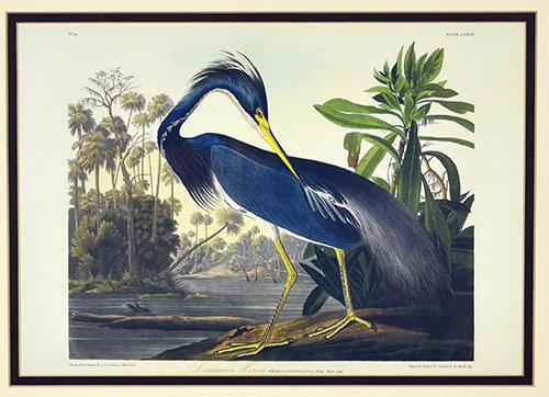 Framed Louisiana Heron Art Print, John J.ames Audubon