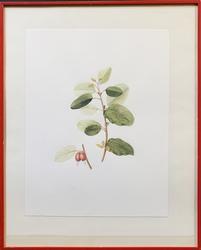 Vintage Lithograph on Paper Decorative Art
