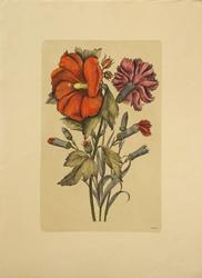 Vintage Botanical Print #4 by Nicholas Robert