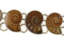 Sterling Silver Nautilus Ammolite Shell Fossil Statement Bracelet