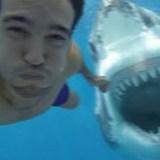 ¿Qué posibilidad tienes de sobrevivir a un Tiburón?