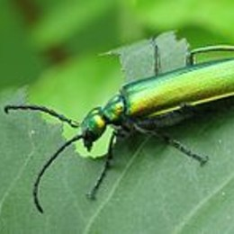 ¿Insecto Favorito? - animalia