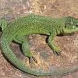¿Reptil Favorito? - animalia