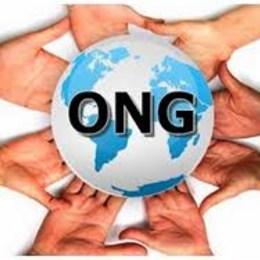 ¿Colaboraría con alguna ONG? - Test for my family 3