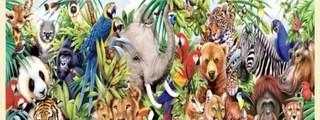Preguntas y respuestas: ¿Cuánto sabes sobre los animales?
