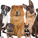 ¿A qué perro te pareces según tu personalidad?