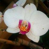 Que flor eres