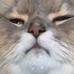 ¿a Aimep3 le gustan los gatos? - ¿Qué tanto sabes sobre el universop3?