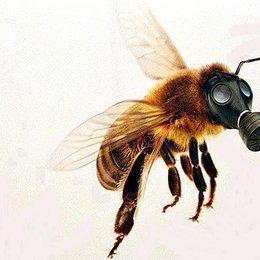 ¿Cuáles son las principales causas de la desaparición de las abejas a nivel mundial? - ¿Cuánto sabemos sobre el maravilloso mundo de las abejas?