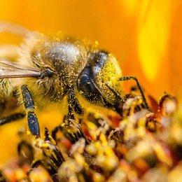 ¿Cuáles son las tareas que debe realizar una abeja obrera? - ¿Cuánto sabemos sobre el maravilloso mundo de las abejas?