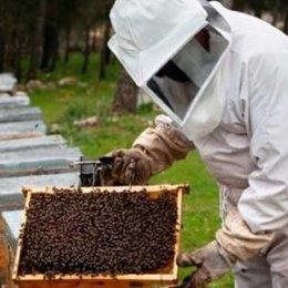 """¿Qué es la """"apicultura""""? - ¿Cuánto sabemos sobre el maravilloso mundo de las abejas?"""