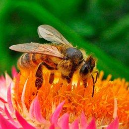 ¿Qué pasaría si no hay polinización? - ¿Cuánto sabemos sobre el maravilloso mundo de las abejas?