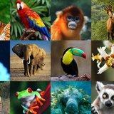 ¿Cuánto sabes de animales?