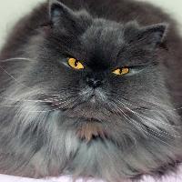 comencemos con una facil antes de que aparecieran como eran - que tanto sabes de tu animal favorito los gatos uwu
