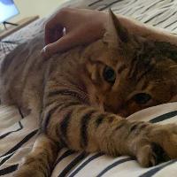 como se llama su gato? - cuanto sabes de robleis???????????