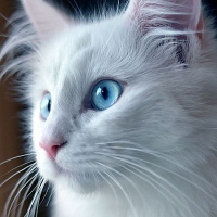 como se le dice a los gatos machos y a las gatas hembras - que tanto sabes de tu animal favorito los gatos uwu